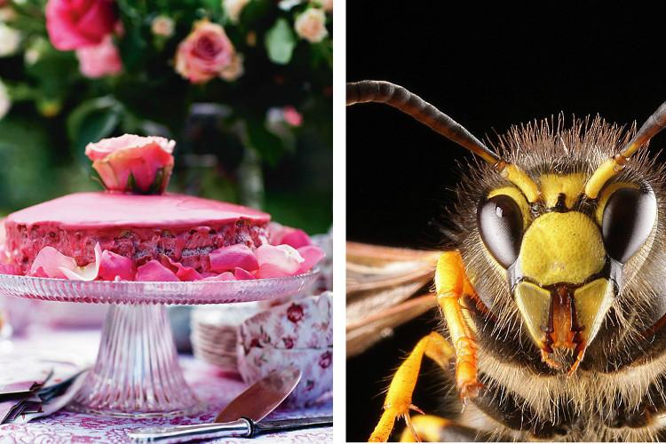 Fruchtfliegen und Co