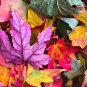 Herbstdeko selber machen – Ideen wie Sie ihr Zuhause verschönern können.